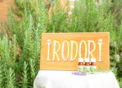 ユーカリレモンを植えてみました(精油の紹介あり) 敦賀アロマルーム『IRODORIいろどり』