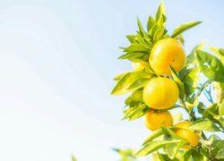 心地いい香りを楽しむ  敦賀アロマルーム『IRODORI』