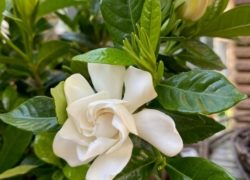 花がいい香りがするわけ  敦賀アロマルーム『IRODORIいろどり』