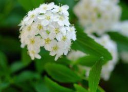 庭のハーブの虫食いについて(精油ペパーミントの紹介) 敦賀アロマルーム『IRODORIいろどり』